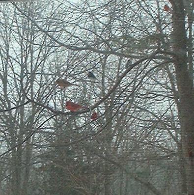 birdsintrees1.jpg