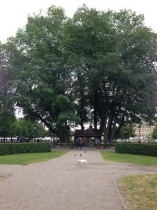 blogg stockholm alm