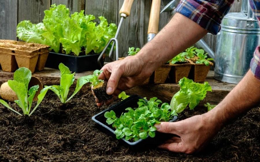 Ημερολόγιο Σποράς: Πότε Σπέρνω και Φυτεύω Λαχανικά και Βότανα