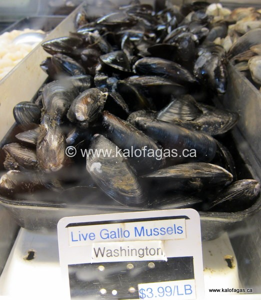 Mussels With Fennel & White Wine Sauce