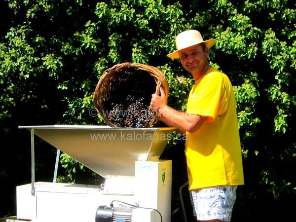 making wine, Xanthi, Thrace