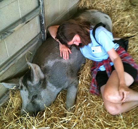 pig and Kama
