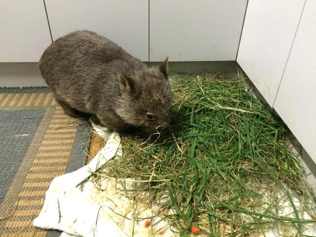 woman eating grass on kitchen floor