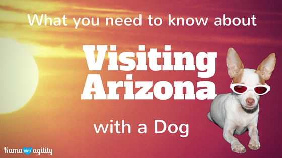 What you need to know about visiting Arizona with a dog - KamaLovesAgility