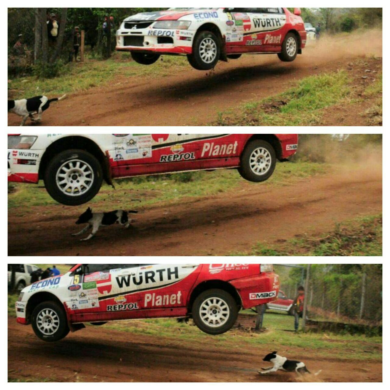 perro rally salva vida