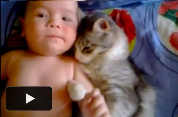 Los mejores videos de gatitos