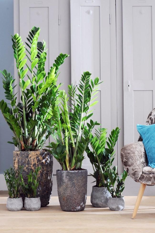 Decoratie Planten Binnen.Makkelijke Kamerplanten Voor Studentenkamers Kamer Nl
