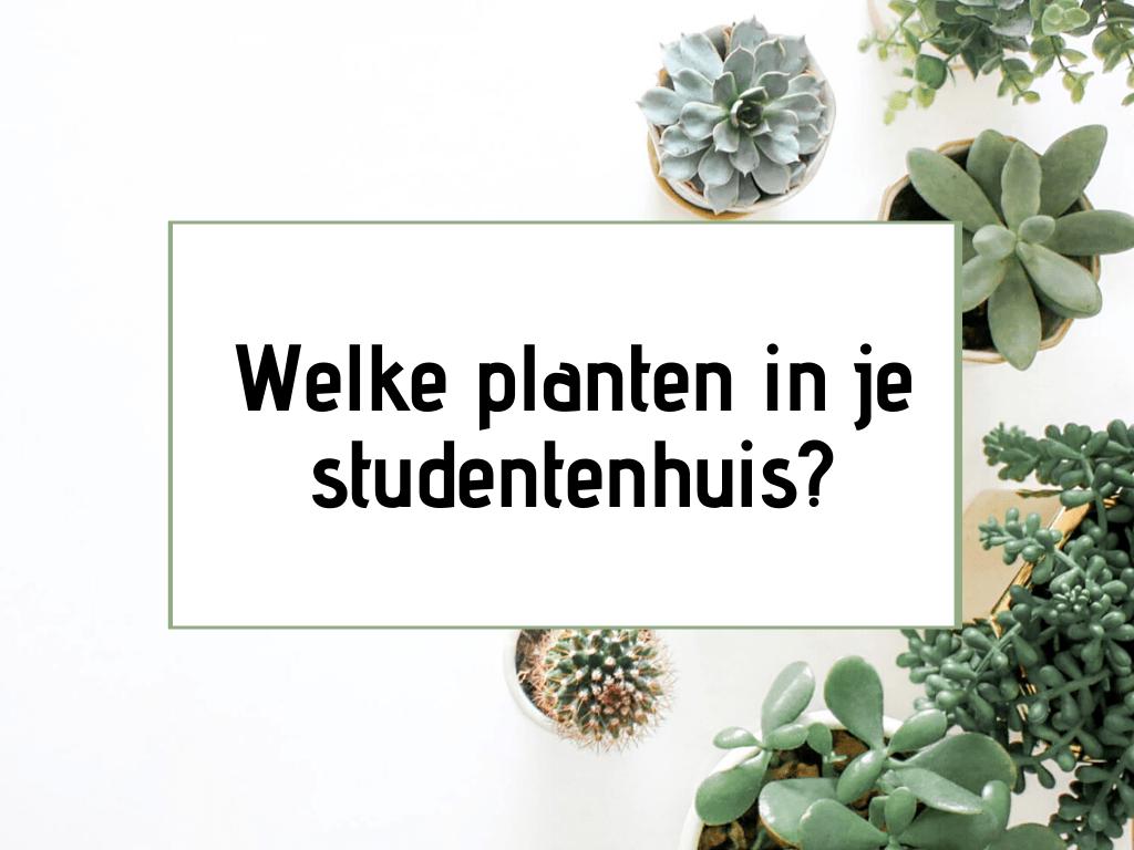 planten in je studentenhuis