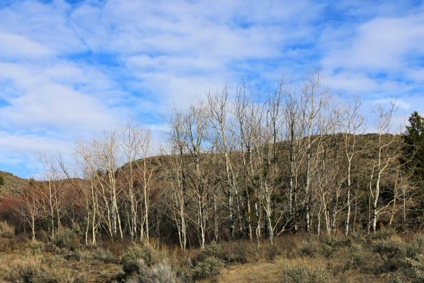 Batchelor Ridge 011r