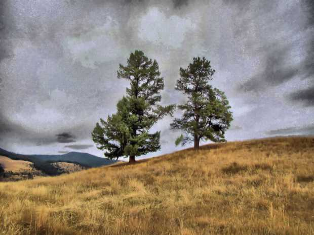 Grasslands Community Trail 017 Localtone r