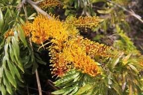 Kauai 2013 041r