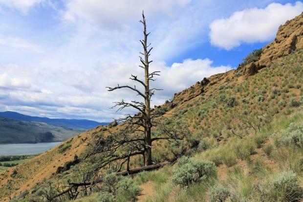 Mara Canyon 038r