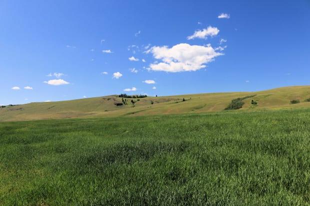 Napier Ranch 052r