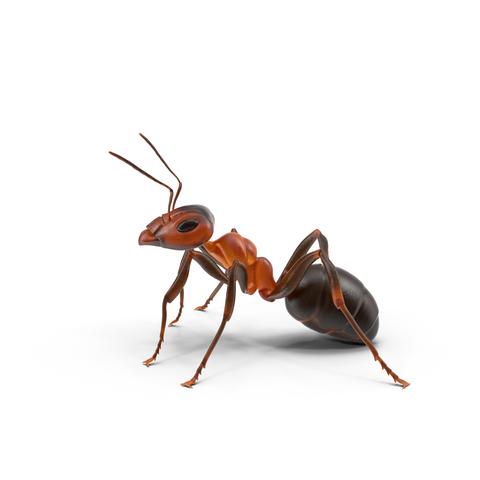 kammerjäger ameisenbekämpfung