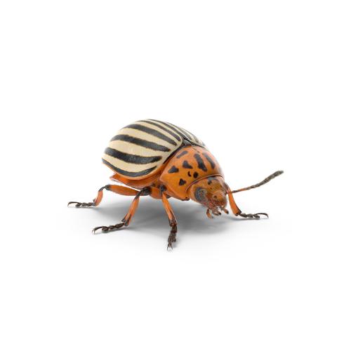 kammerjäger käferbekämpfung