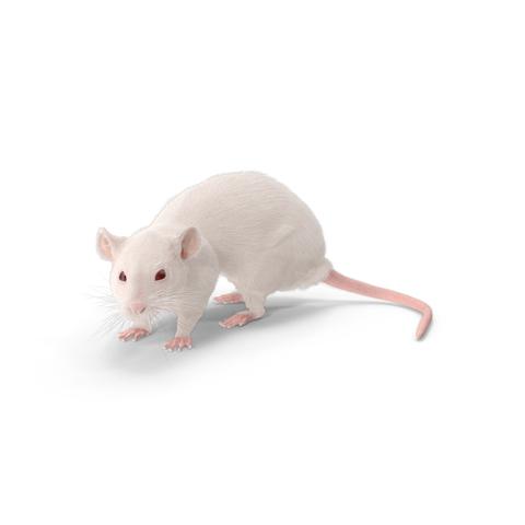 kammerjäger mäusebekämpfung
