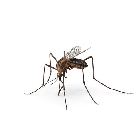 kammerjäger mückenbekämpfung