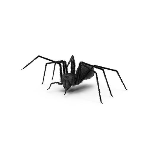 kammerjäger spinnenbekaempfung