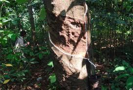 kampung 99 pepohonan, pohon