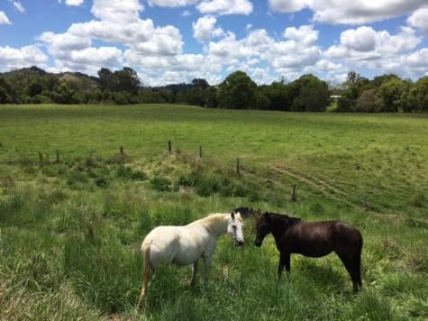kandanga-farm-horses