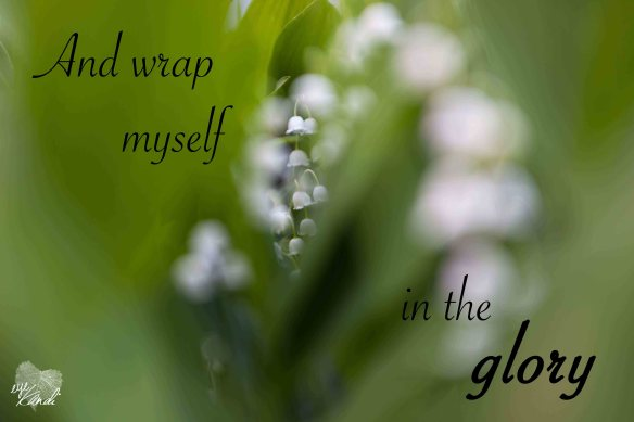 lily of the valley flowers surrounded by leaves with the caption and wrap myself in the glory