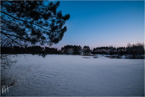 sunset of blue and pink over a field covered in snow with a pine tree on one side