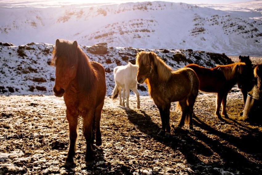 036-awesome-iceland-landscape-photography-kandisebrown2016