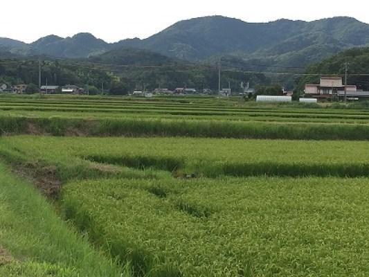 田んぼ風景写真