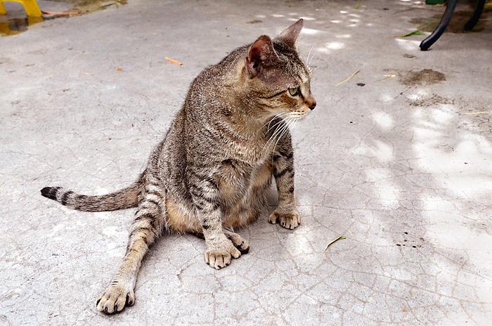 Hemingway Home - Six toed cat