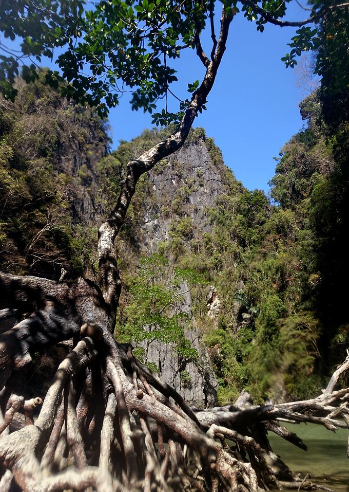 phang-nga-bay-mangrove