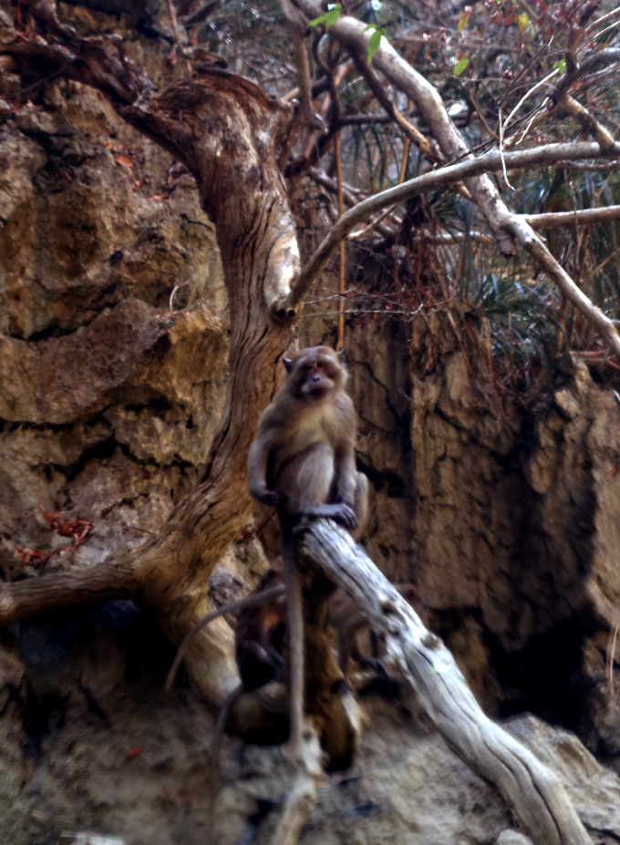 phang-nga-bay-monkey