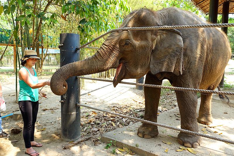 Thailand-WFFT-Cindy-Bunmi-Elephant-01