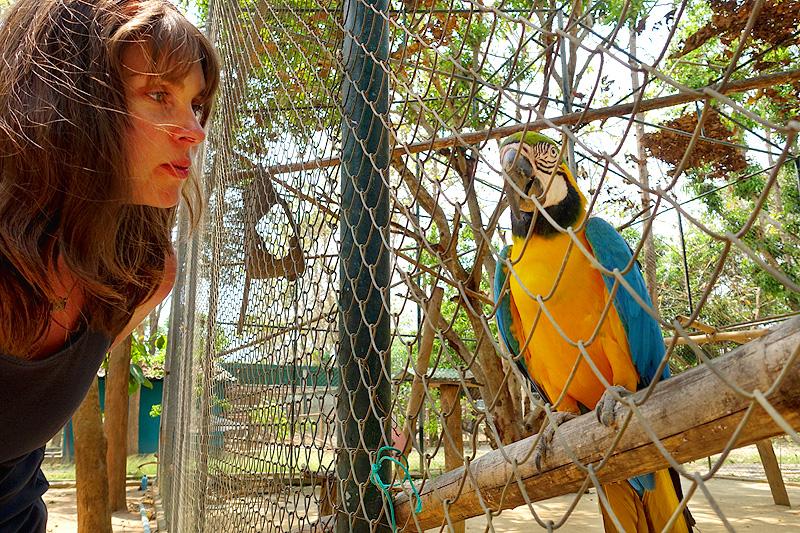 Thailand-WFFT-Kara-talking-to-Parrot-01