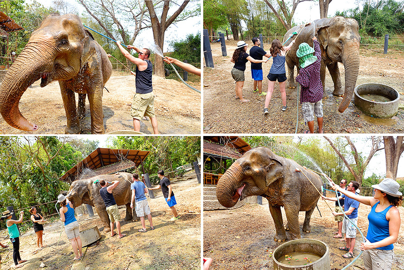 Thailand-WFFT--Pailin-Elephant-Bath