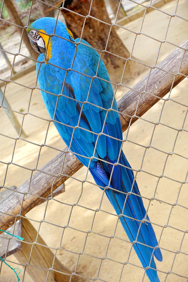 Thailand-WFFT-Parrot-02