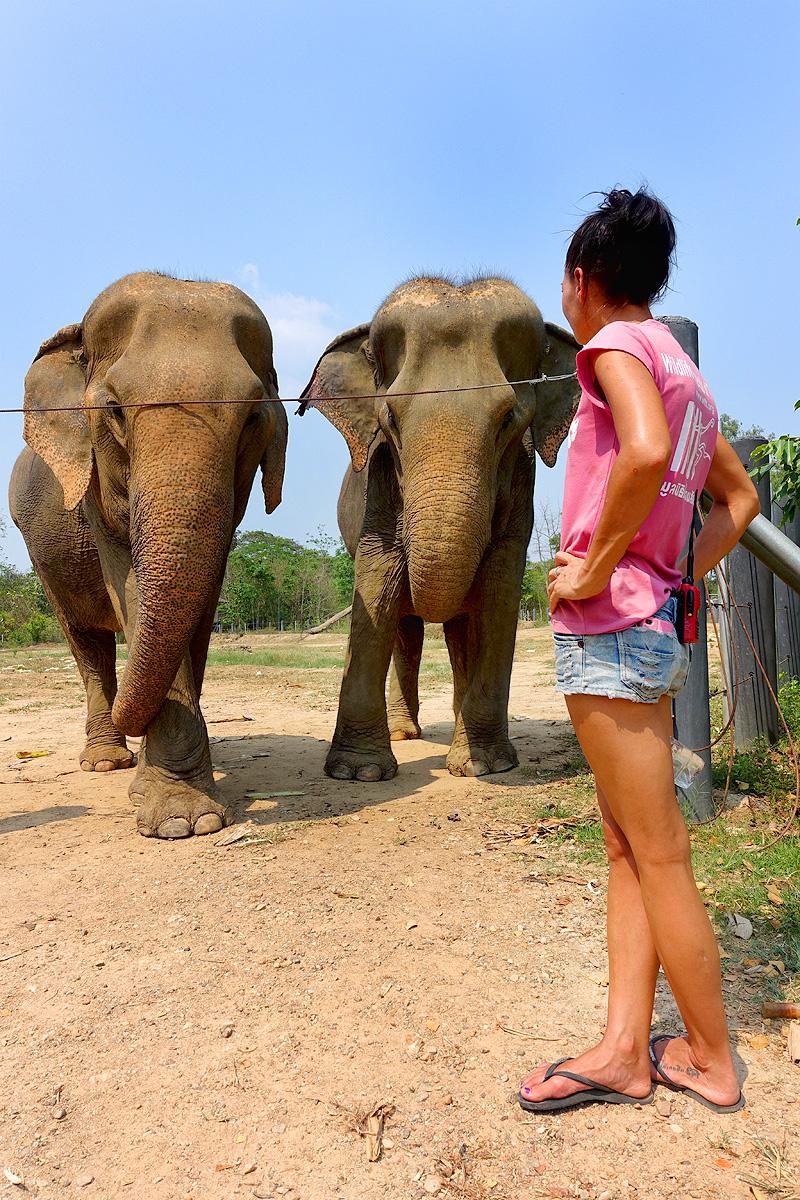Thailand-WFFT-elephant-tour-females-02