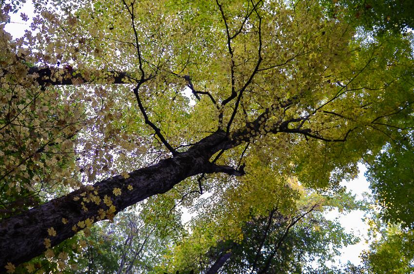 bote-mountain-trail-old-tree