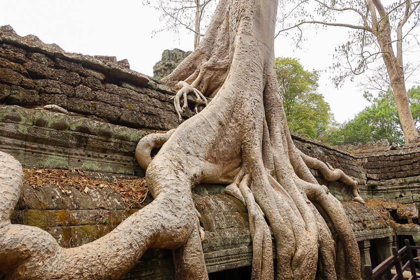 ta-prohm-tomb-raider-tree-2