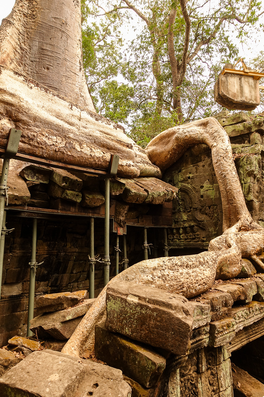 ta-prohm-tree-3