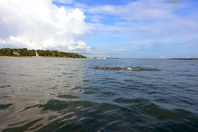Hilton-Head-Island-Dolphin-Boat-dolphins-03