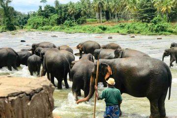 Elephant Orphanage & Botanical Garden Tour