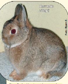 hermelinviltgrå