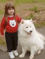 It all began with Samoyeds.
