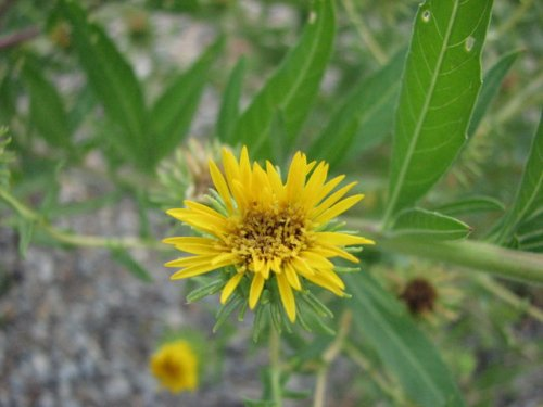Typical Flowering Plant