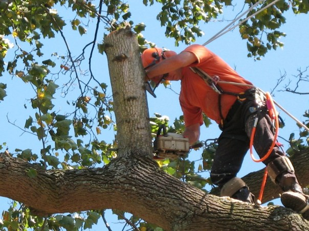 Reliable Tree Service Houston