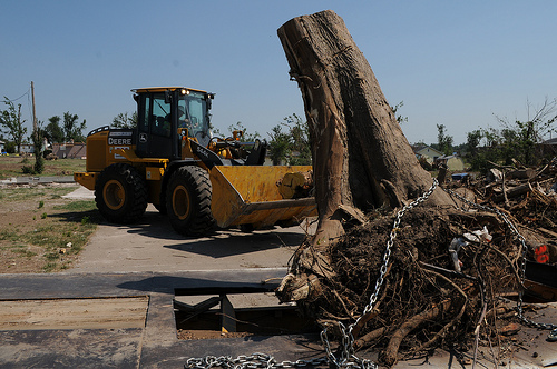 How Much Does It Cost To Remove A Tree