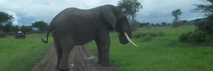 Ngorongoro Crater Elephants