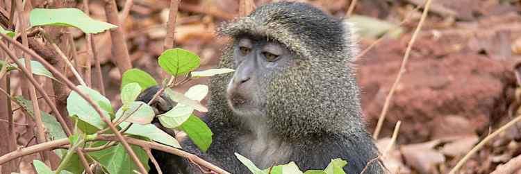 Arusha National Park primates