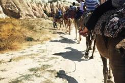 kapadokya deve safari (4)