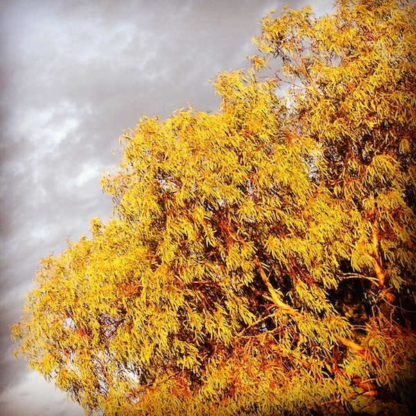 Autumn trees in Melbourne